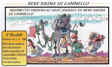 Urina cammello musulmani
